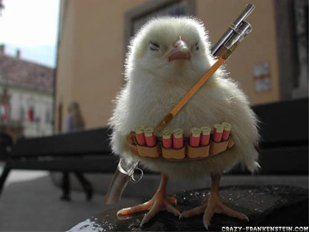 http://mantiqaltayr.files.wordpress.com/2009/09/chicken-war.jpg