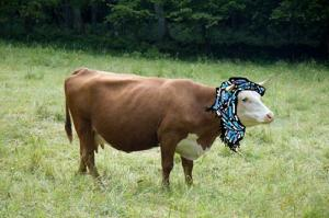 Oh My Allah! Even the cow's will be Mooooselims!